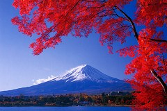 Mt. Fuji with maples