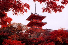 Kiyomizu Temple with maples