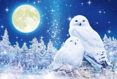 Happy white owls