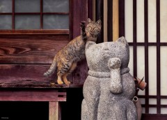 Cat life in Kyoto