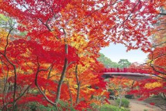 Yahiko Park maples