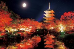 Autumn pagoda by moonlight