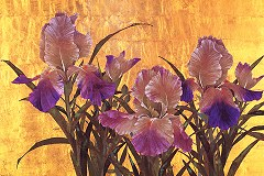 Royal irises